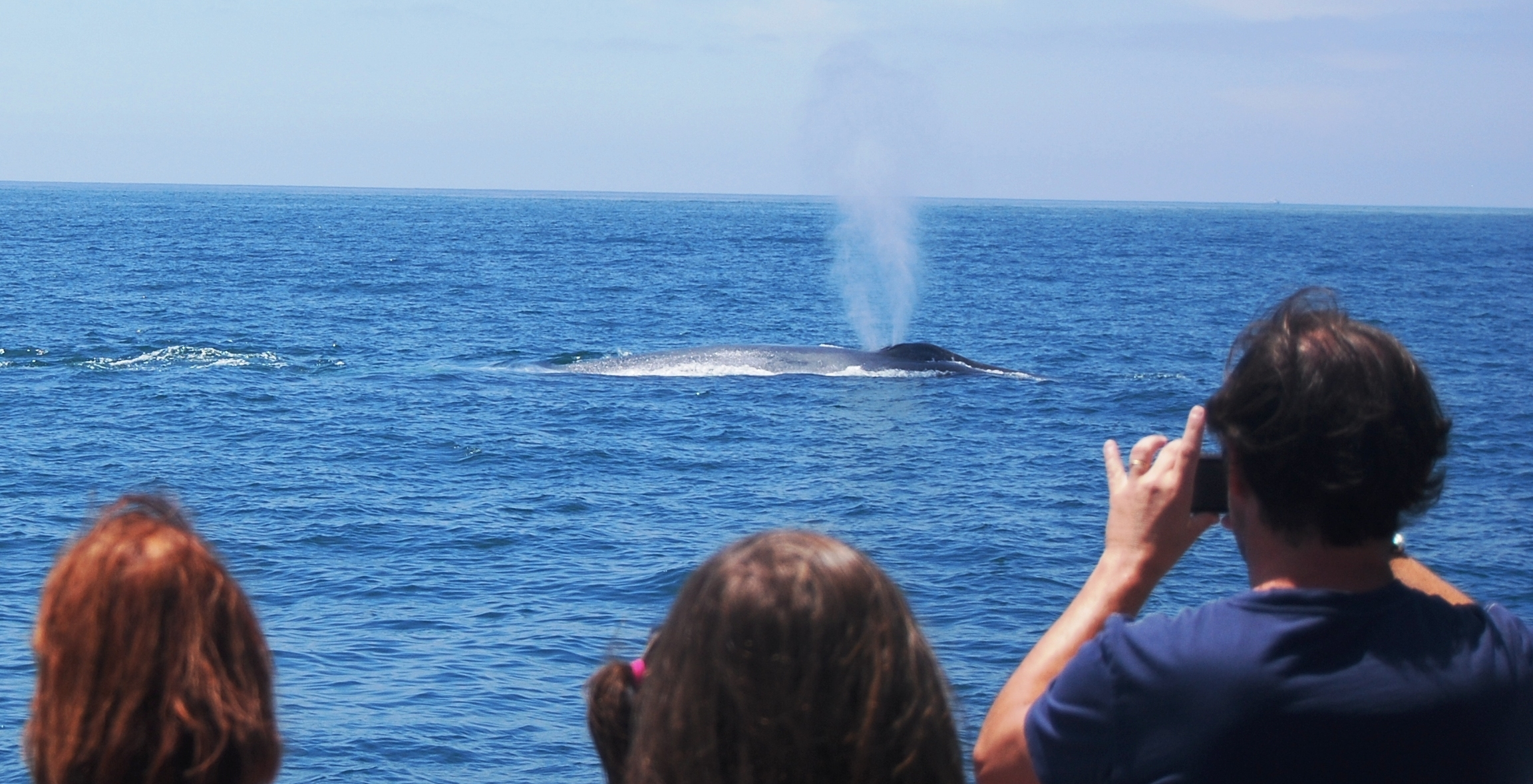Things To Do Near Wilmington Whale Watch Cruises