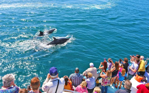 OC Whale Watching Cruises