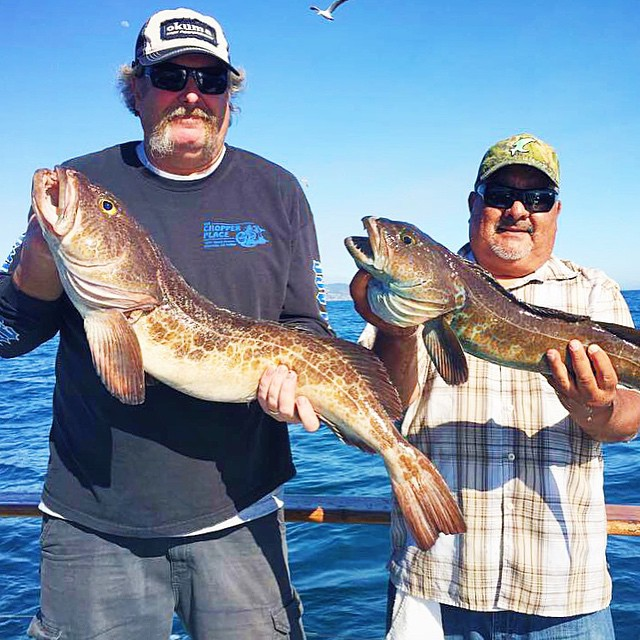 Fish count from the western pride 1 2 day pm trip for Davey s locker fish count