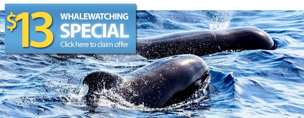 Whale Watching Offer