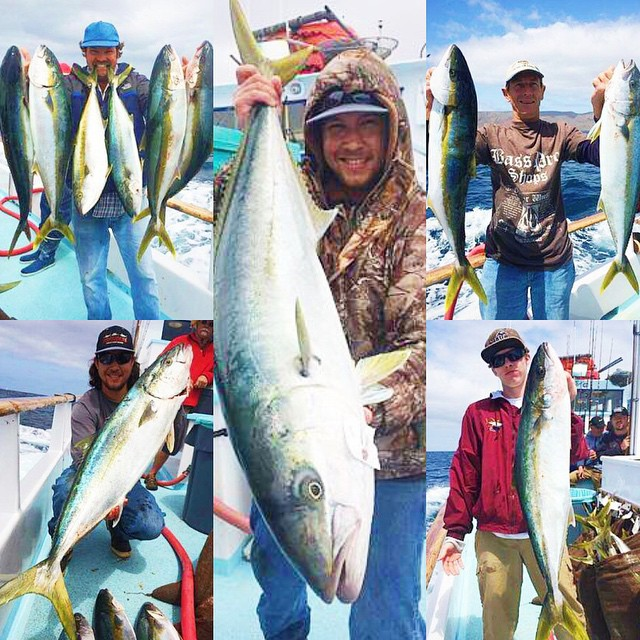 51 yellowtail yesterday on the thunderbird getsome for Davey s locker fish count