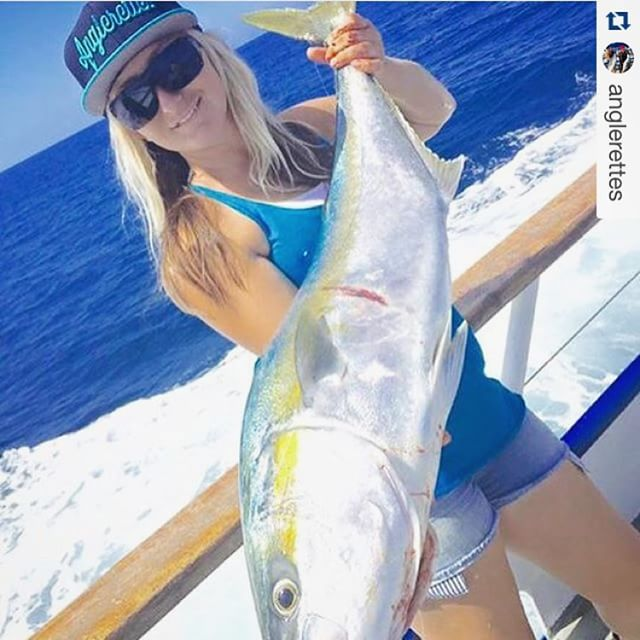 Repost anglerettes my yellow tail from yesterday on for Davey s locker fish count