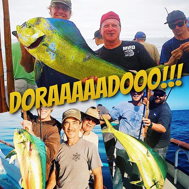 Having an awesome time catching that dorado for Davey s locker fish count