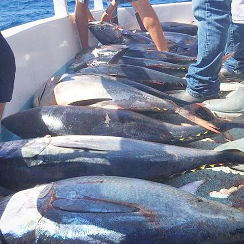Can you help us unload some of this fish please plan a for Davey s locker fish count