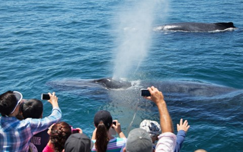 Blue Whales & Humpback Whales