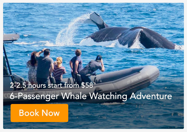 Private Whale Watch Tour