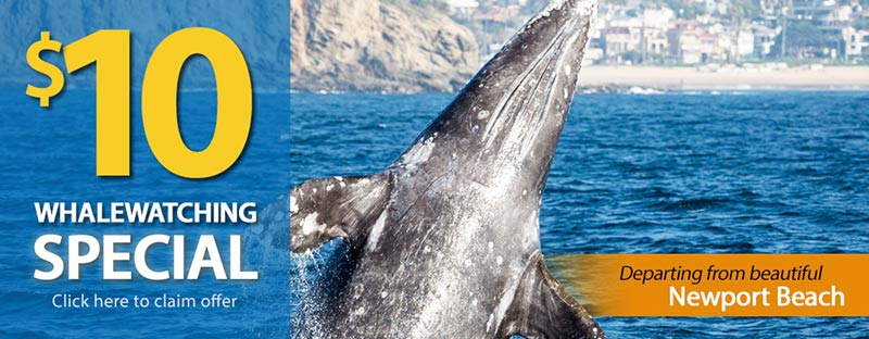 Long Beach Whale Watching $10 Special