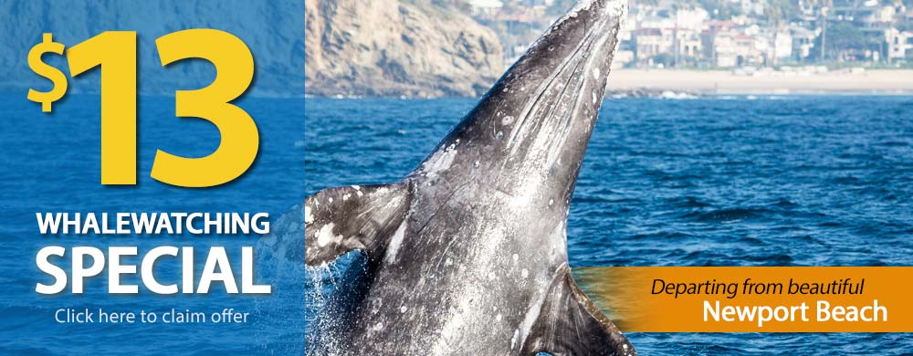 Los Angeles Whale Watching $13 Special
