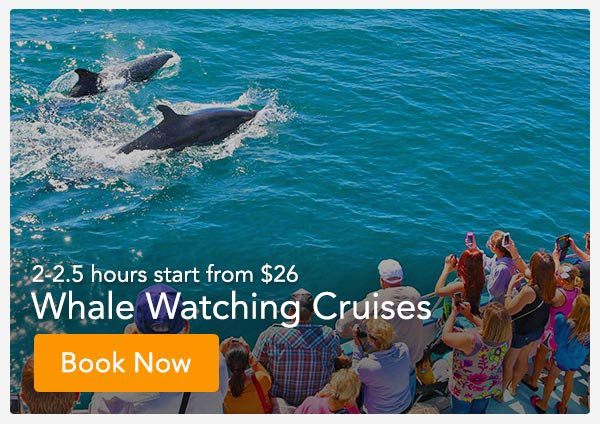 Orange County Whale Watching Tickets