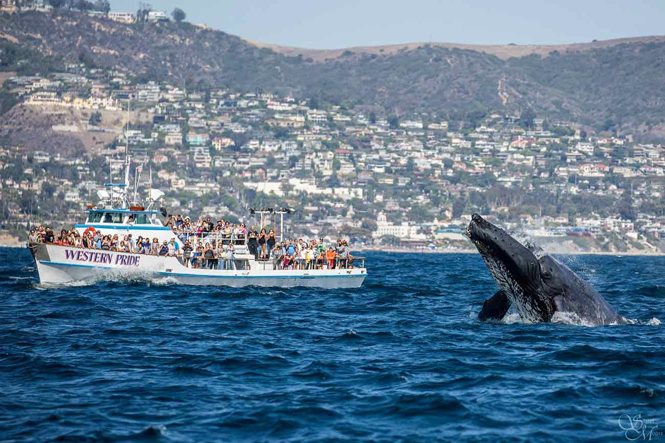 Whale Watching Long Beach Visitors