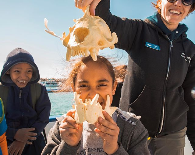 Open wide! Young students of Bell Gardens Elementary School discover the powerful jaws of the California sea lion while enjoying a field trip at sea! We love that we can give students the opportunity to step out of the classroom and into the field to learn more about our oceans! Photos by @chelseamayerphotography with naturalist, Jessica Roame.